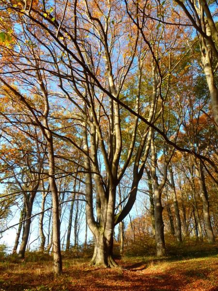 Im Waldpark Semper